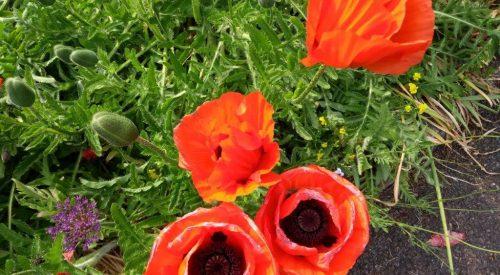 National Arts In Nursing Homes Day: May Blossom